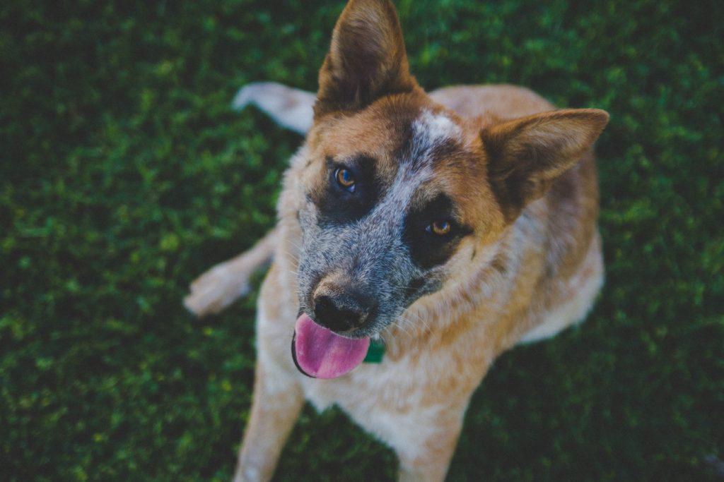 Adopt A Pet – Adoptable Pets